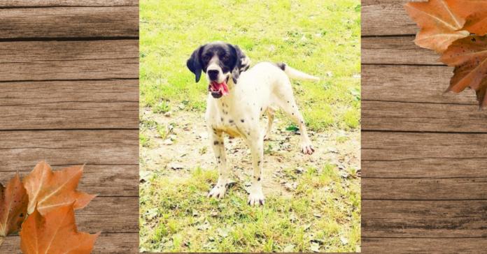Pablo, cane da adottare a Bevagna, in Umbria