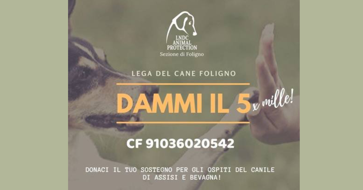 Lega del Cane di Foligno: la storia di Pablo, meraviglioso quattro zampe da adottare