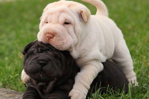 cani si abbracciano