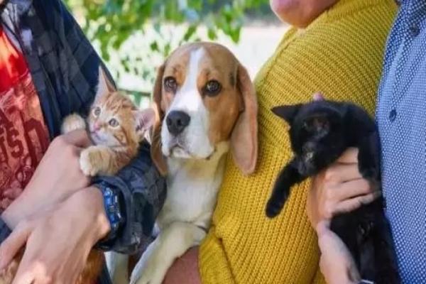 Daisy, la Beagle che si è presa cura di due gattino trovatelli