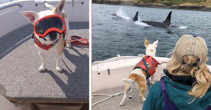 Cagnolino su una barca