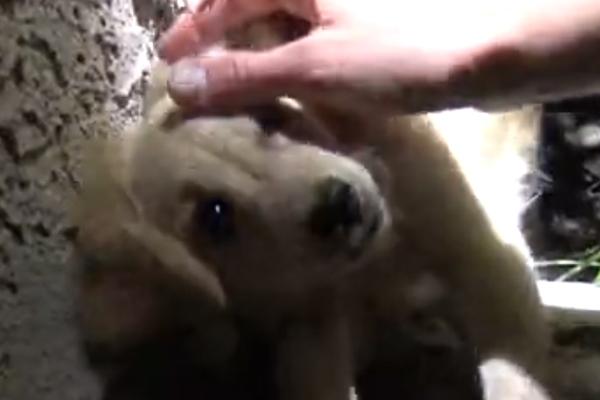 Fox, il cucciolo di cane rifiutato dalla sua proprietaria che adesso cerca la felicità (video)