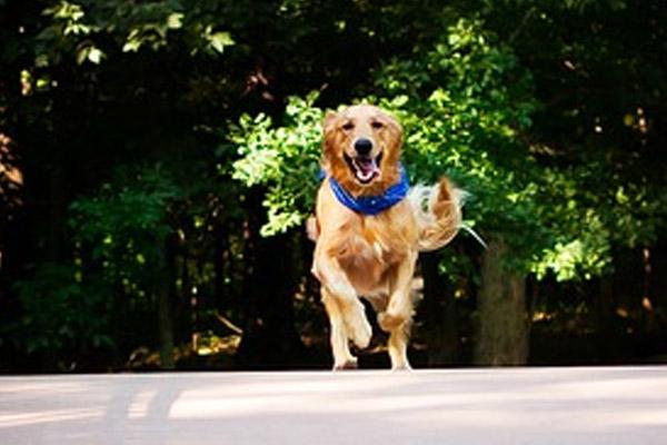 Glock, il cagnolino che è riuscito a riabbracciare la proprietaria grazie al bel gesto di alcuni volontari di un rifugio