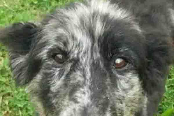 La storia di Tex, il cagnolino prima maltrattato e poi salvato che adesso è stato messo all'asta (video)