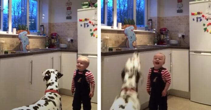 Dalmata che gioca con un bambino