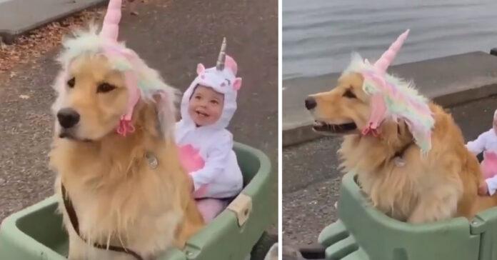 Cane e bambino travestiti da unicorno