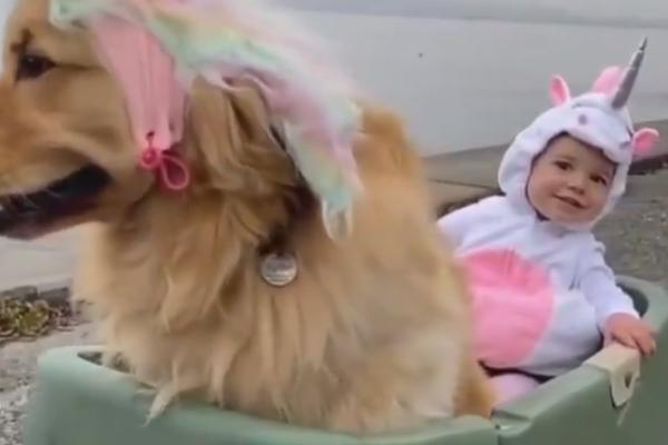 """Il Golden Retriever e il bambino si """"trasformano"""" in unicorni e il video diventa virale"""