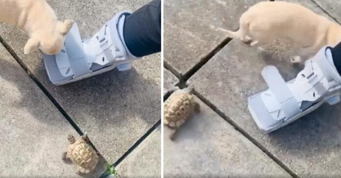 Cagnolino con una tartaruga