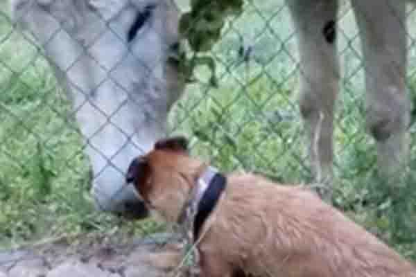 Cane con asino