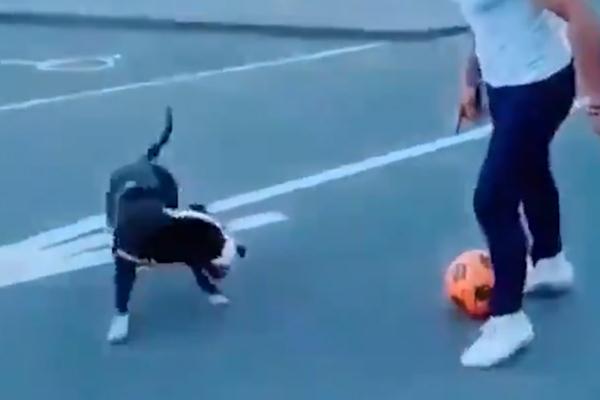 Cane calciatore