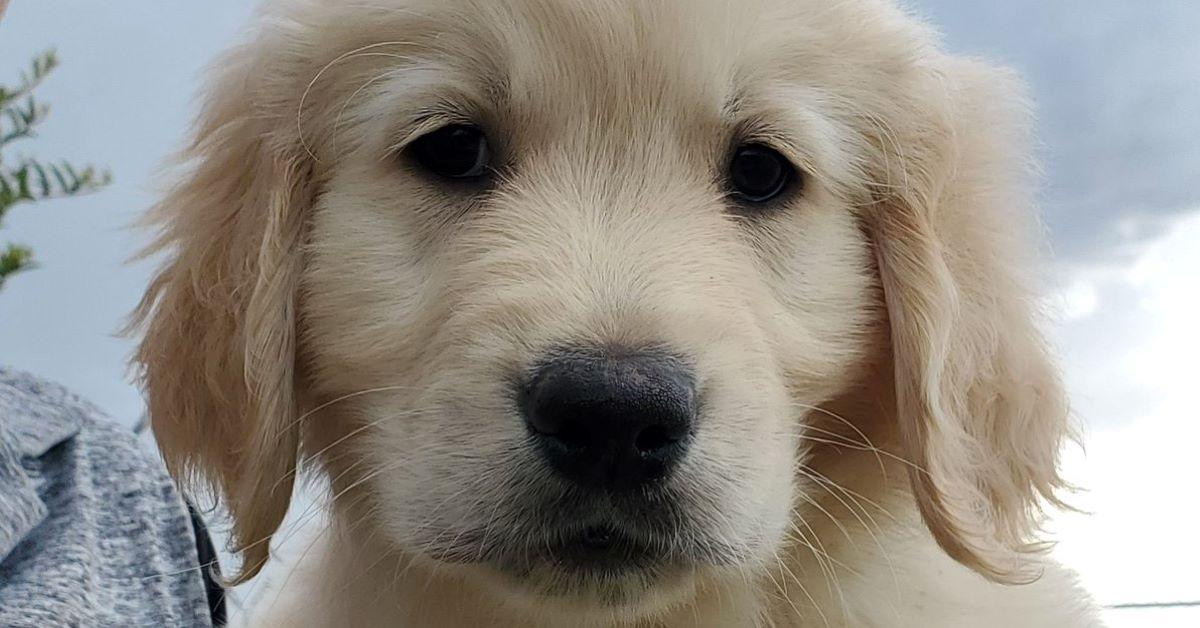 come capire se il cucciolo di cane è triste
