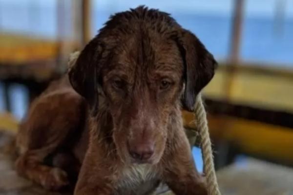 Il salvataggio del cagnolino Bonrod finito misteriosamente in mare
