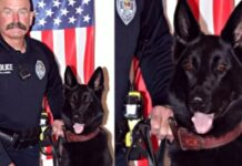 cane poliziotto in posa
