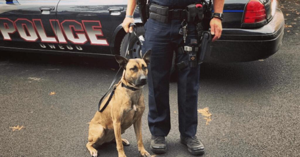 La rinascita di Maggie, da cagnolina randagia a cane poliziotto ed eroe