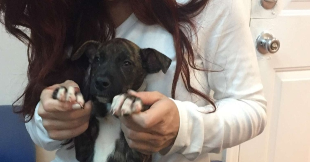La storia del salvataggio di Nemo, Dory, Ariel e Moana, i cuccioli che rischiavano l'eutanasia