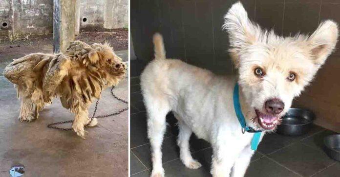 Trasformazione cane salvato
