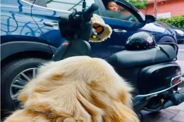 L'espressione triste del cane Teemo conquista il web