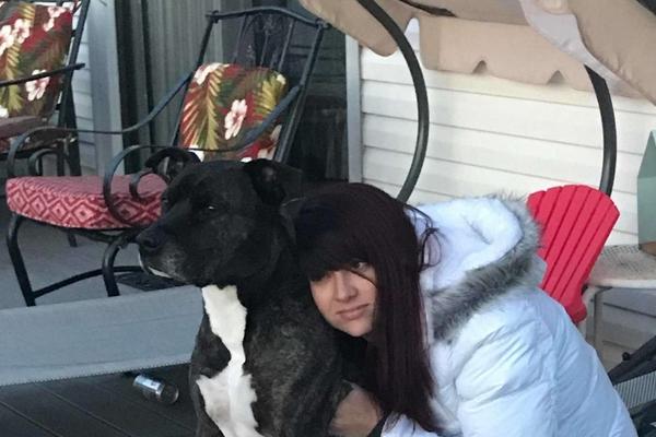 Lola e Jackson, i due Pitbull che hanno un cancello dedicato a loro