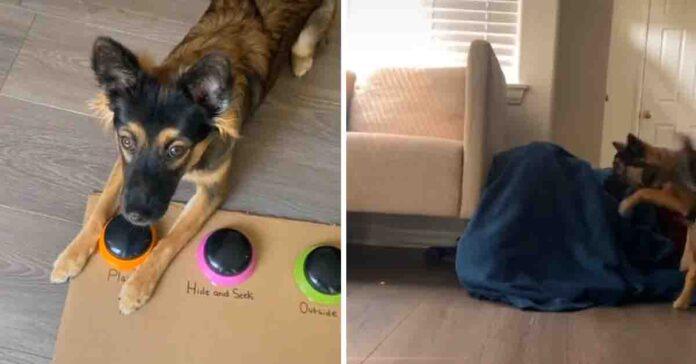 Cane che gioca a nascondino