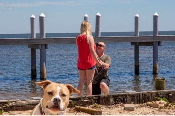 """Molly, la pitbull che ha partecipato alla proposta di matrimonio del suo """"papà"""""""