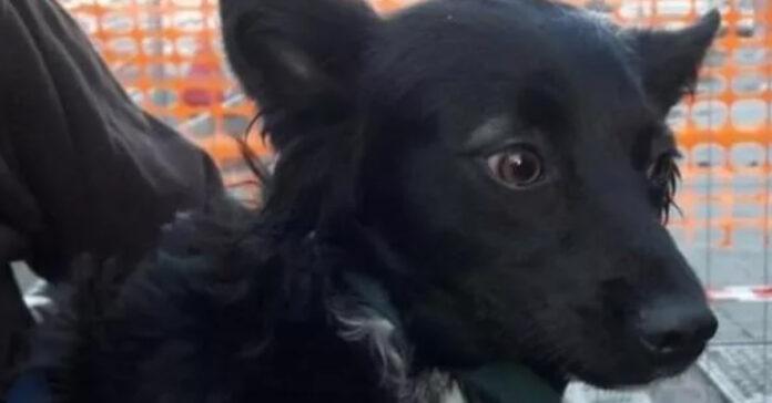 Cagnolino nero che osserva