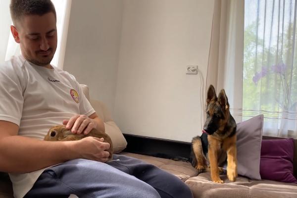 Il dolce Pastore tedesco incontra il coniglietto Sam per la prima volta (VIDEO)