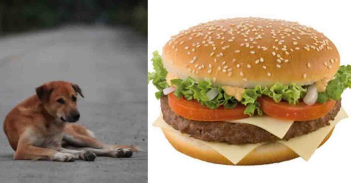 Cane con hamburger
