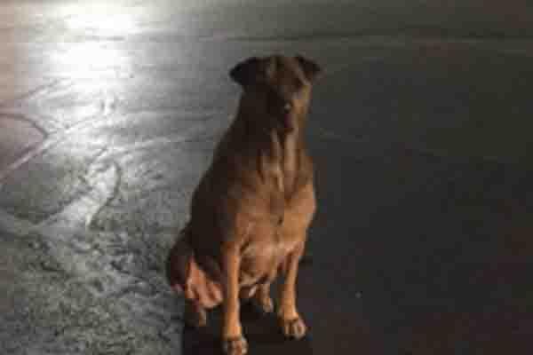 Cane seduto in strada