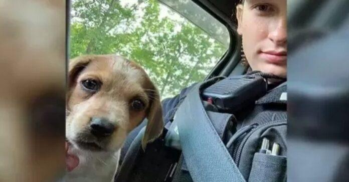 cucciolo con una poliziotta
