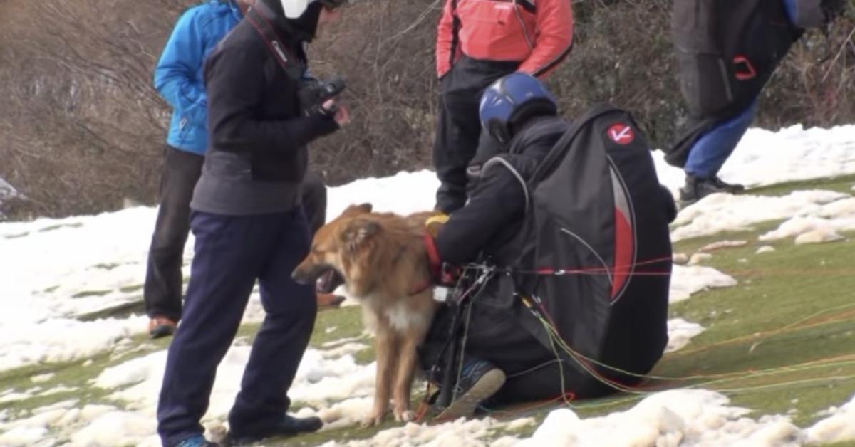 Cross, il cane che vola in parapendio (VIDEO)