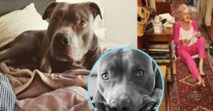 cane che ha salvato la sua vicina
