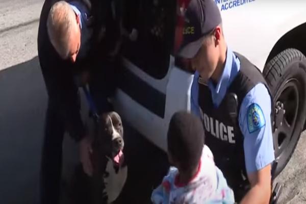 Un bambino si è perso per la strada e un Pitbull sconosciuto gli ha fatto la guardia (VIDEO)