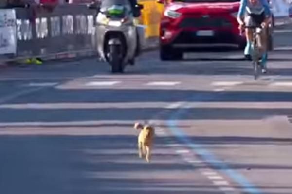 """Un cagnolino """"partecipa"""" al giro d'Italia 2020 e il video diventa virale"""