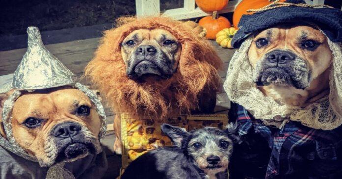 cani travestiti da Halloween