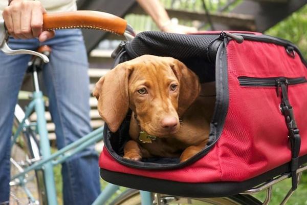 Abituare il cane al trasportino: regole e modi infallibili per farcela in tempi brevi