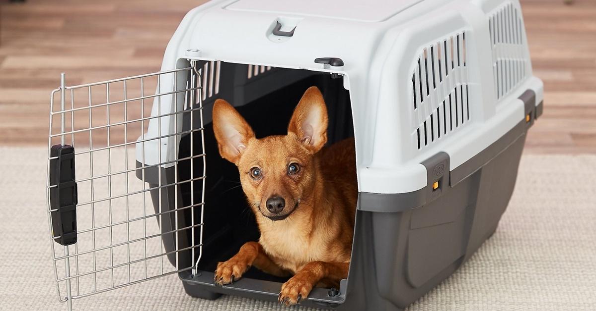trasportino per cani di piccola taglia