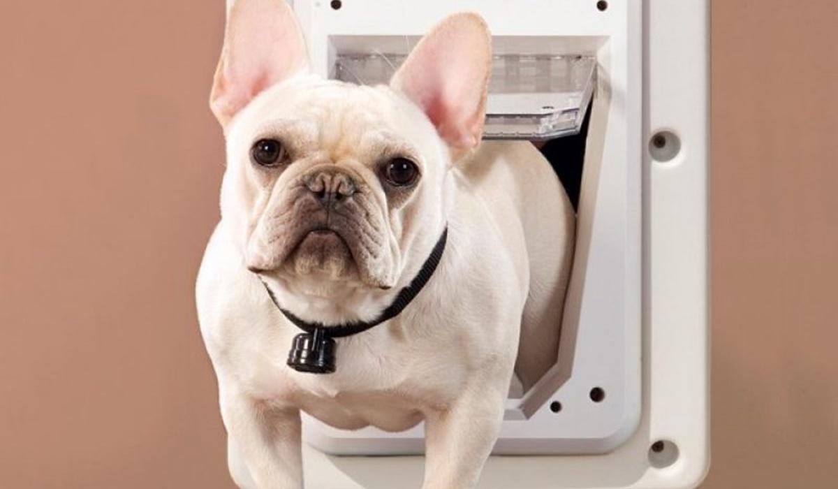 Come addestrare un cane a usare la sua porticina, in modo facile e veloce