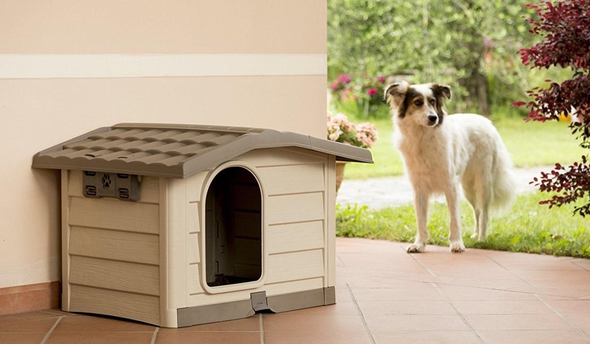 cane non vuole entrare nella cuccia