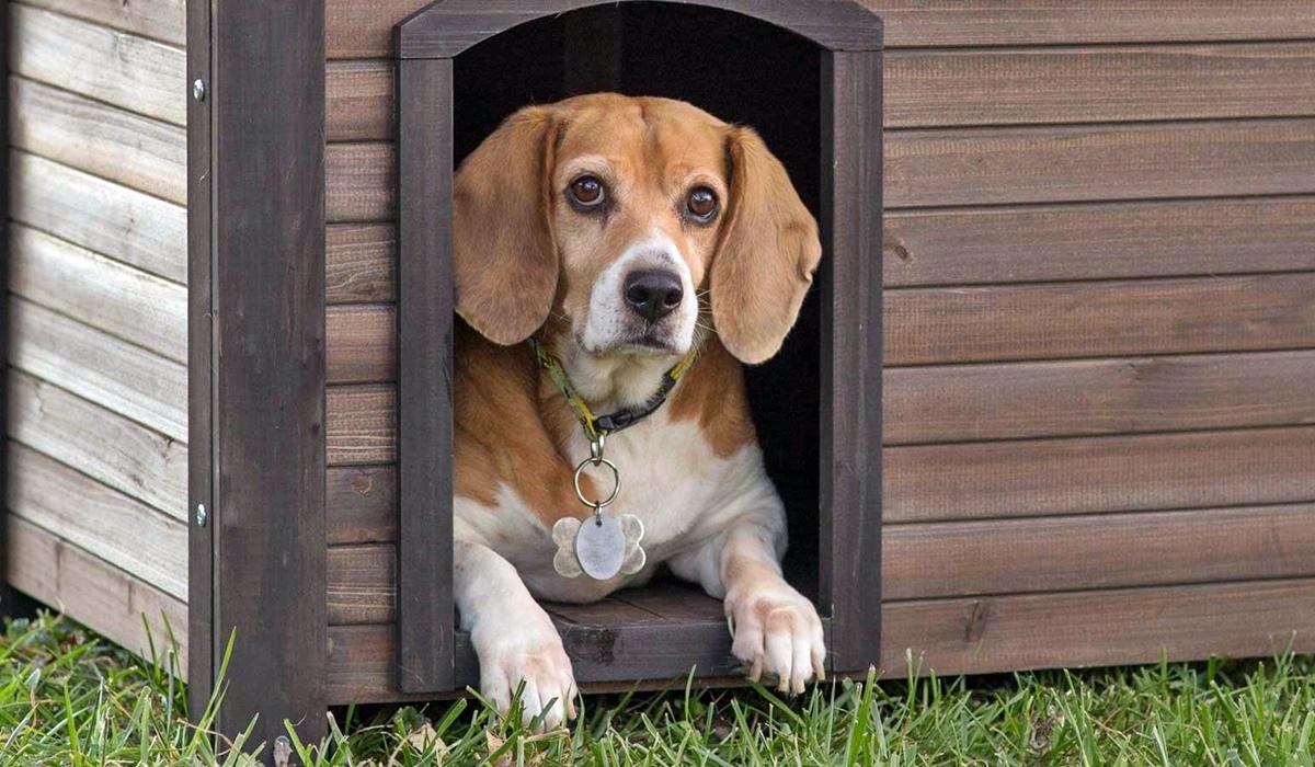 cane dentro la cuccia