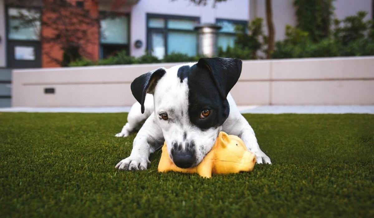 cucciolo che gioca in giardino