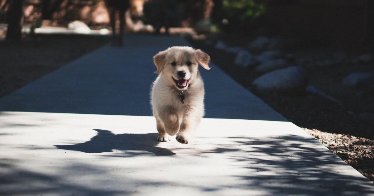 Come scegliere un cucciolo di cane: i modi per capire se è quello giusto per te