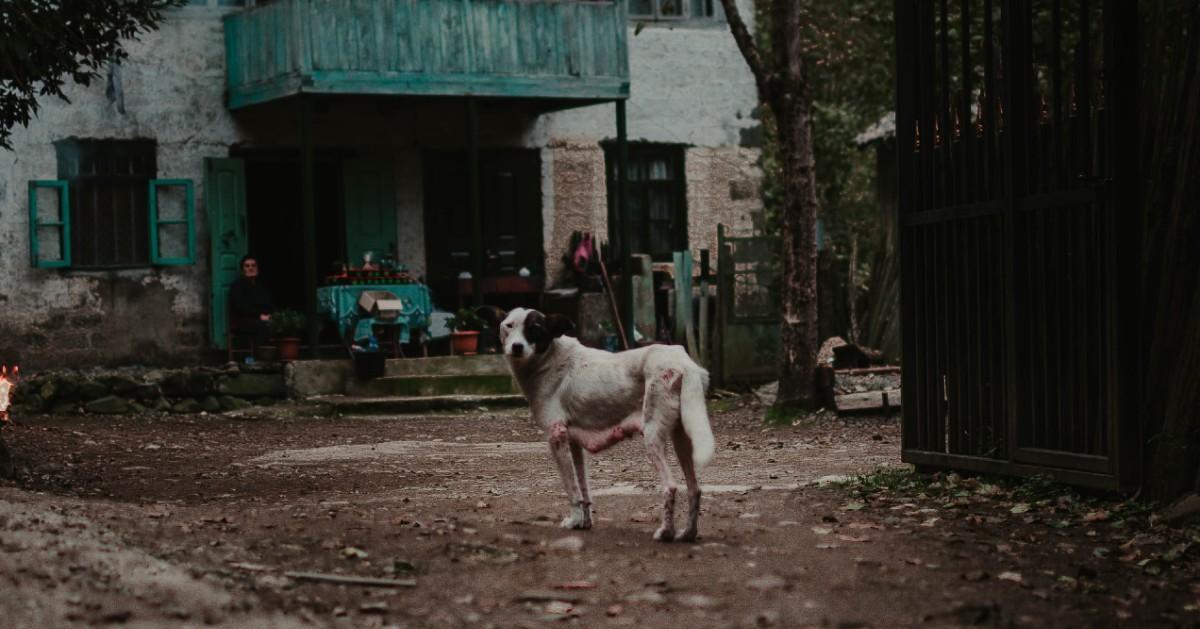 Cani, dove adottarli in Friuli Venezia Giulia: piccola guida