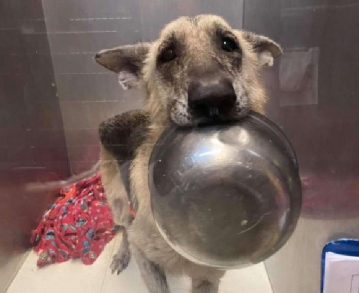 athena cagnolina visita veterinario