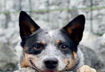 cane dolce dal muso simpatico