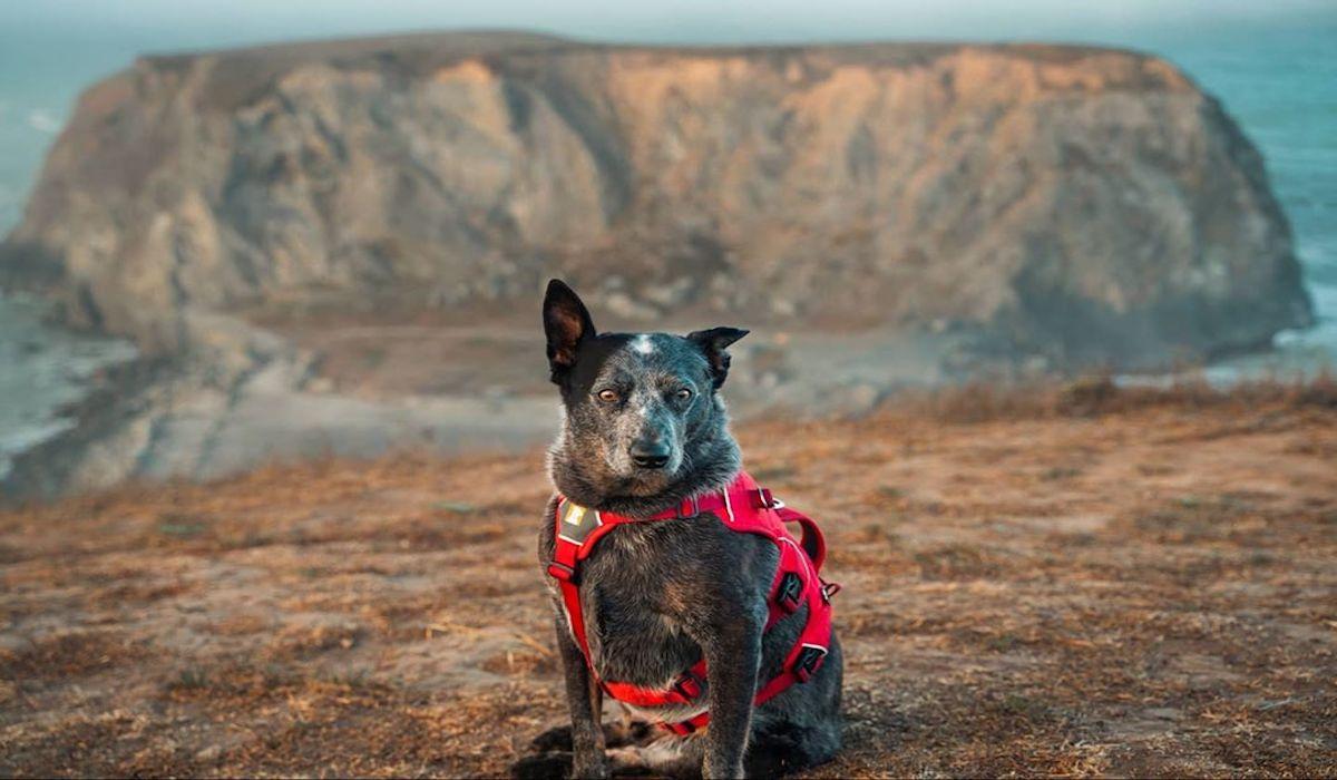 cane dallo sguardo molto buffo