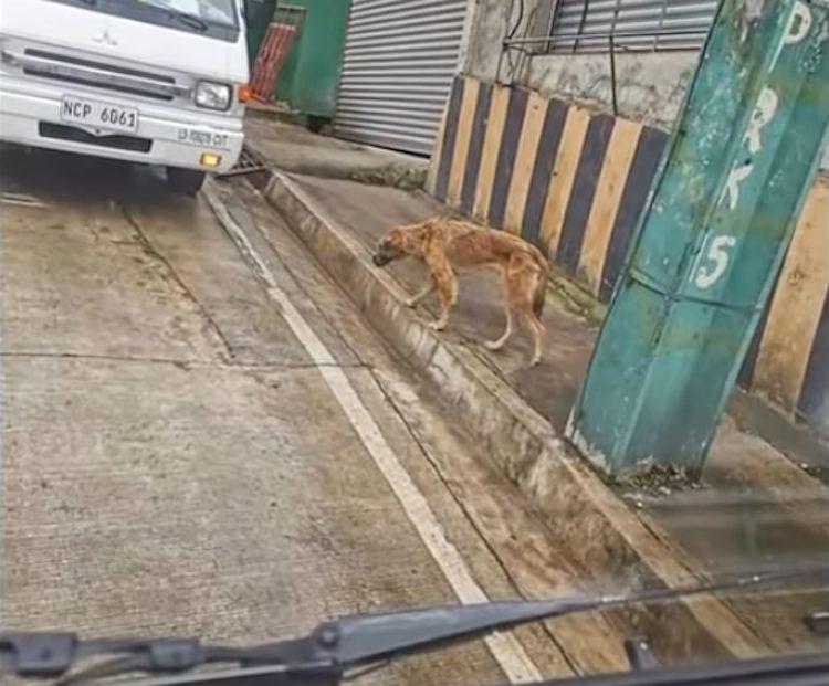 Balboa, il cagnolino randagio trovato con il muso legato è salvo (VIDEO)