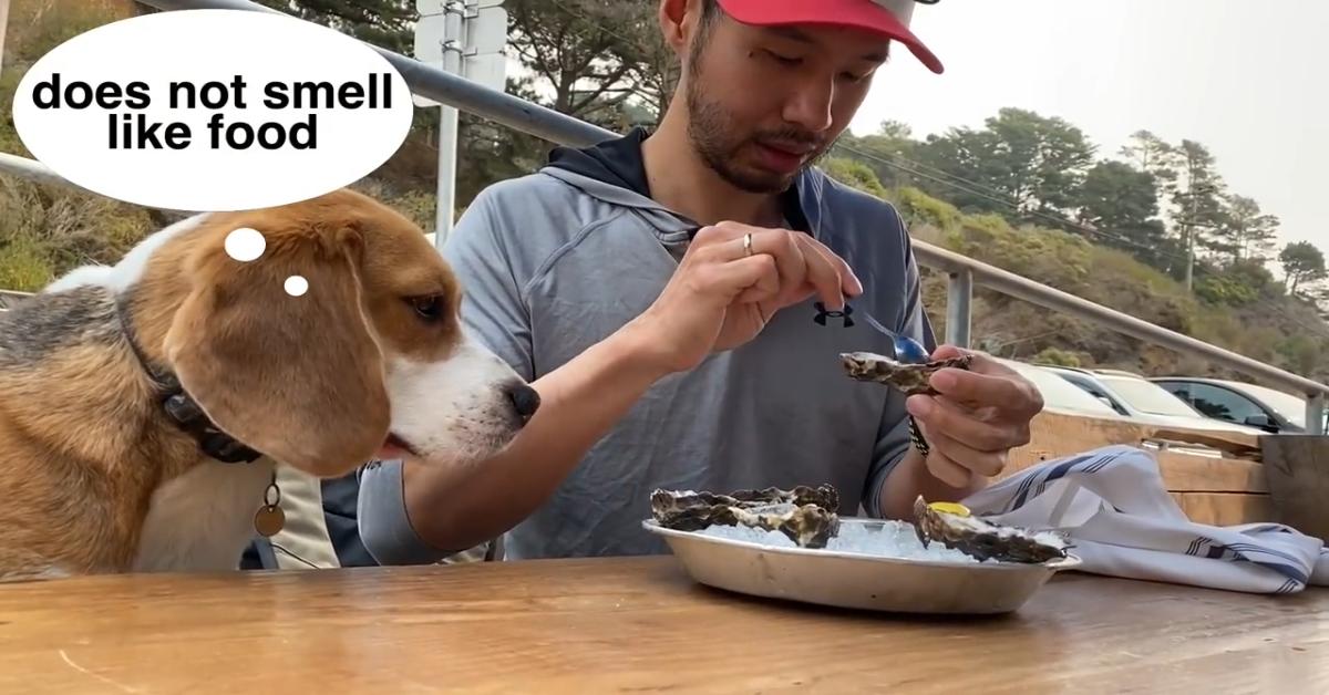 Oliver, il beagle odia le ostriche e non lo nasconde (VIDEO)