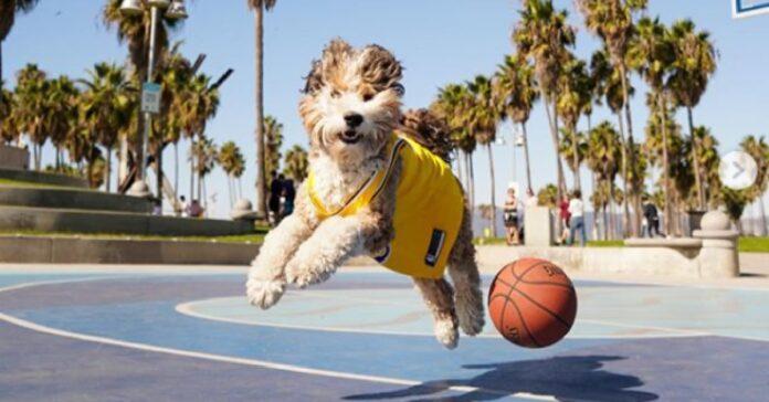 benji cane 35 kg gioca basket proprietario