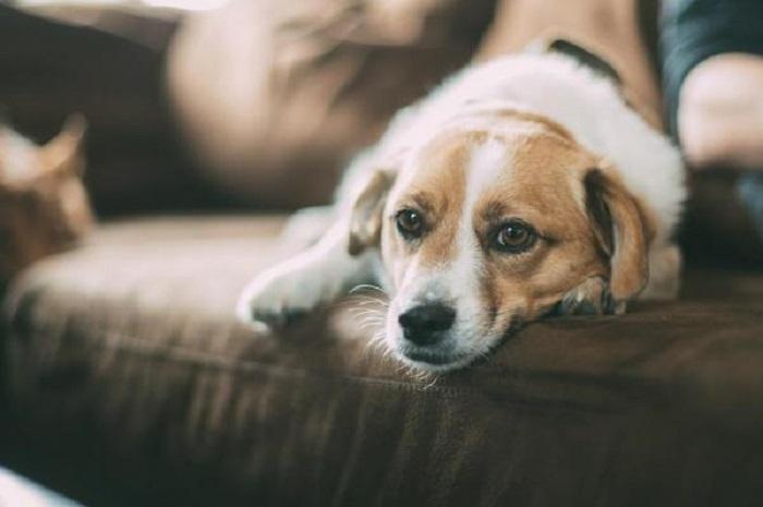 Bettie, la coraggiosa cagnolina che ha detto addio al suo cucciolo (VIDEO)