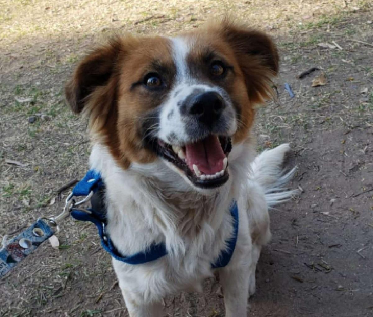 Bruno, il cagnolino al quale vietarono l'ingresso in casa (VIDEO)